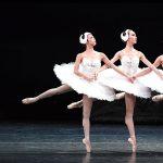 香港バレエ団で「白鳥の湖」にチャレンジ!