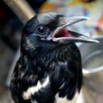 鳥インフルが発生 雀鳥花園を閉鎖に