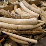 象牙の輸出入規制 5月より条例改正