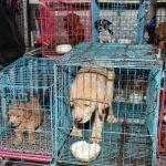 動物虐待犯罪の重罰化求め デモ行進に6000人参加
