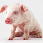 ブタ肉は牛肉よりも高価に 荃湾屠殺所は廃業の危機?
