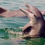 西貢で座礁イルカ見つかる 今年に入り座礁事故は39件