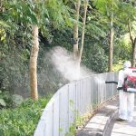 今年初のデング熱感染確認 蝶の保護区避けて殺虫作業