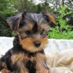 感染者のペット犬に弱陽性 飛沫吸引は感染とは限らず